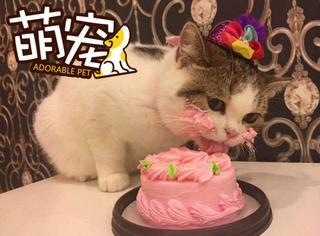 【萌宠】一个生日蛋糕让这只喵生成了一堆表情包!