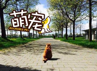 """【萌宠】小小幸运星!称霸校园的""""猫长官""""爱撒娇"""