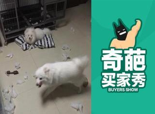 【奇葩买家秀】狗狗一个不小心就快把家给拆了!