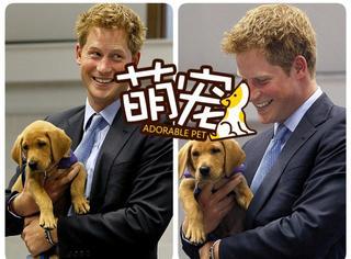 【萌宠】王子们与宠物的那些有爱瞬间