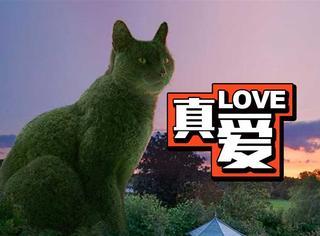 爱猫去世5年,主人的纪念方式惊呆了所有人