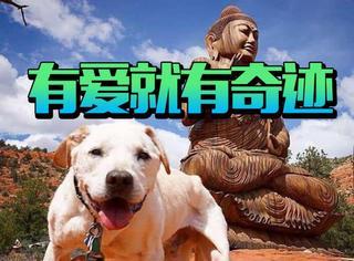 他带着得了绝症狗狗去了35个城市旅行,结果奇迹发生了
