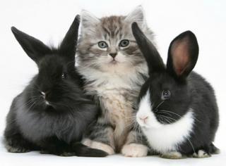 讲真小动物什么的,简直不要太可爱!