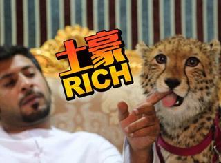 阿联酋阔少炫富新招:养狮子、老虎、猎豹当宠物