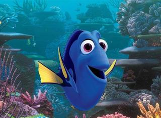 7个小知识让你更了解海底总动员的鱼