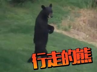 走路像人的黑熊,原来是身残志坚