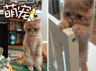 【萌宠】这只猫每天都一脸忧郁:谁要谋害朕?