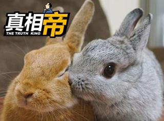 【真相帝】可爱的兔子竟然是淫欲的象征!