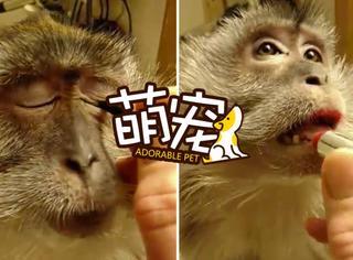 【萌宠】爱美之心,猴皆有之