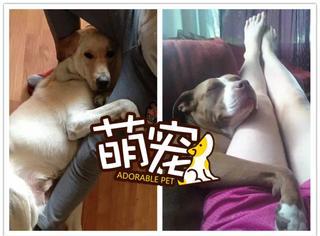【萌宠】诶!借个大腿来抱一抱