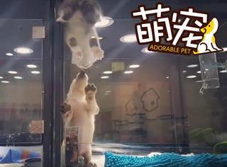 【萌宠】这只喵使尽全力逃离猫舍只为与隔壁的汪约会!
