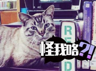 在图书管工作了6年,这只明星猫现在要被开除了