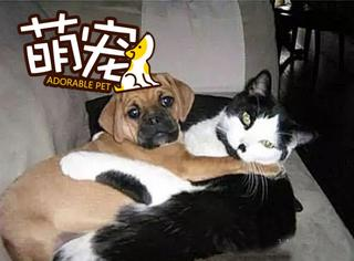 【萌宠】被捉奸的宠物们,真是一脸的尴尬