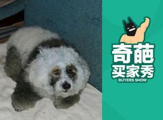 【奇葩买家秀】狗狗被染成熊猫:感觉狗生要废了