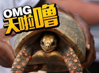 本以为宠物龟丢了,30年后却意外发现它不吃不喝还活着!