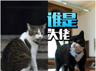 卡梅伦走后,英国第一猫被外交部首席猫打伤了!