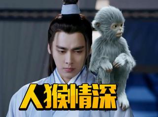 虽然女主都不喜欢他,但是张小凡还有猴子小灰,人猴情深好感动!