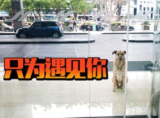 """狗狗和空姐""""一见钟情"""",为见女神宾馆苦等6个月!"""