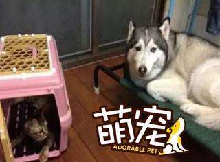 【萌宠】蠢萌二哈捡了只小猫当妹妹养,哪知从此家中地位不保!
