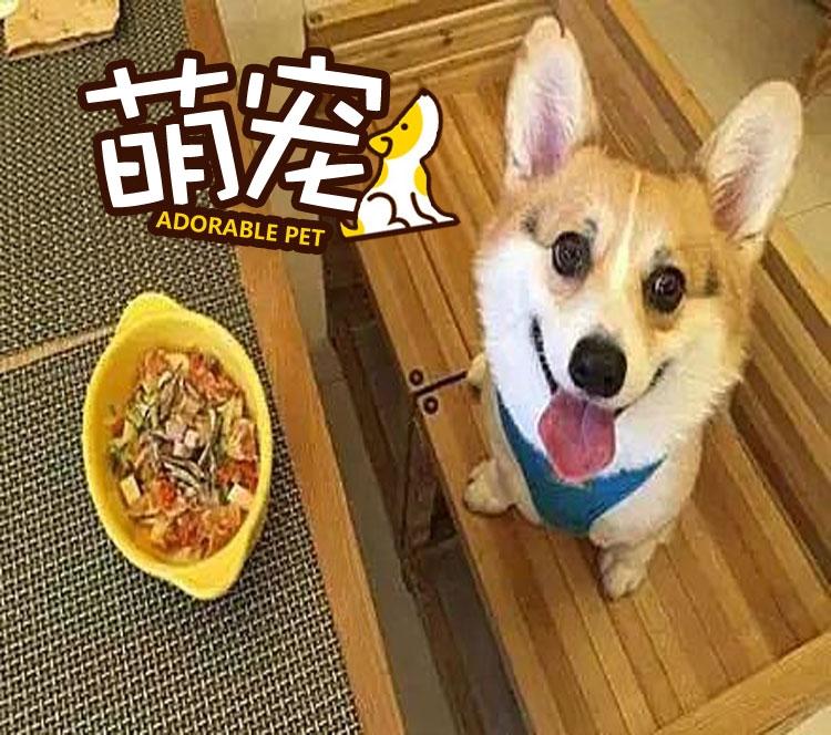 【萌宠】看到美食一脸满足的柯基,再看到烘毛箱后立马变脸!