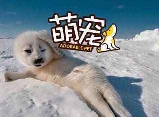 """【萌宠】已笑疯!快来看看动物界的各种""""葛优""""!"""