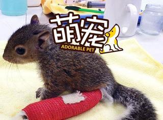 【萌宠】兽医为小家伙包扎胳膊,简直萌翻!