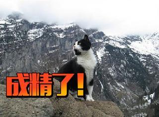 这猫成仙了,竟然帮迷路的游客指了路