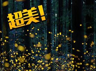 日本摄影师拍的萤火虫太梦幻了,美得像银河