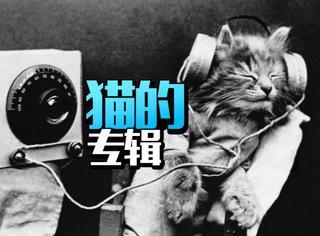 他花10年鼓捣猫音乐,终于推出全球首张猫专辑