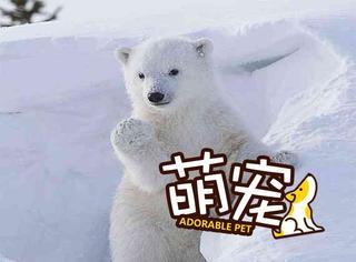 【萌宠】一大波蠢萌熊宝宝来袭,看完心都化了!