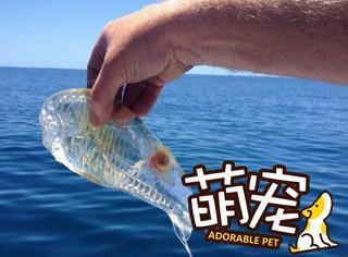 【萌宠】天啊,这条可爱的小鱼竟然是透明的!