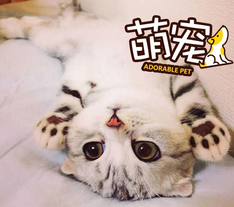 【萌宠】小奶猫们,快到姐姐的怀里来!