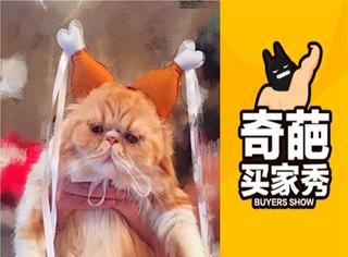 【奇葩买家秀】戴上火腿发箍,喵星人都变哀怨了!