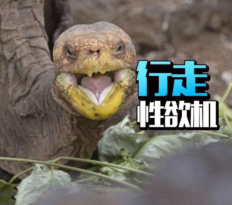 因为性欲太强,这只乌龟拯救了种族!