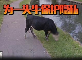 为了保护一头牛的隐私,谷歌地图对它的脸进行了模糊处理