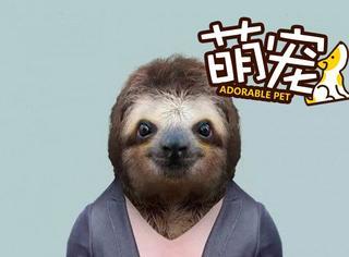 【萌宠】面对残酷的现实吧,动物穿上衣服比你还帅!