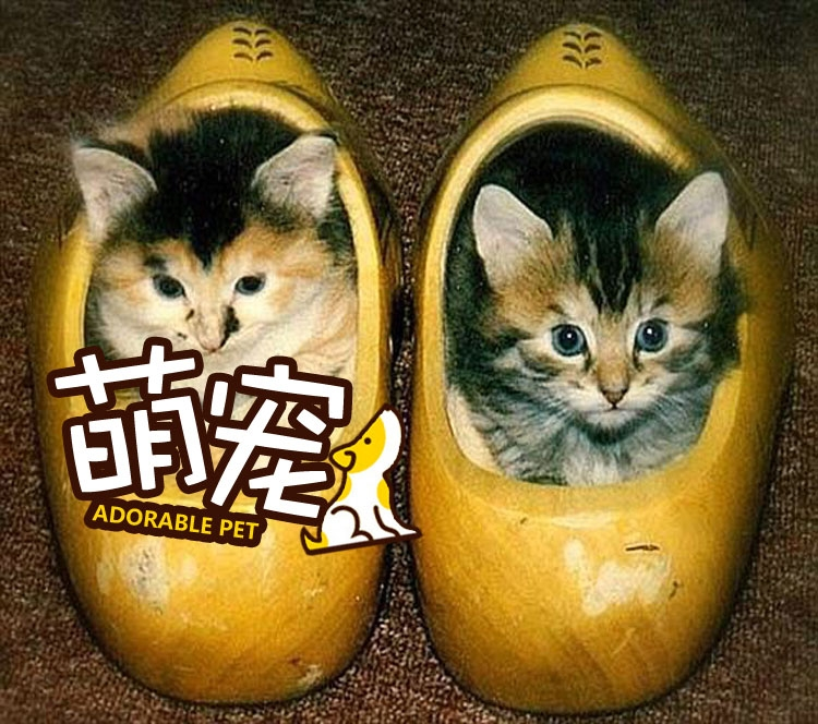 【萌宠】一言不合就钻鞋子的小奶喵们!