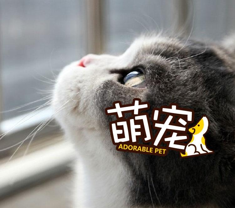 【萌宠】喵星人的完美侧脸,不过全让正脸毁了!