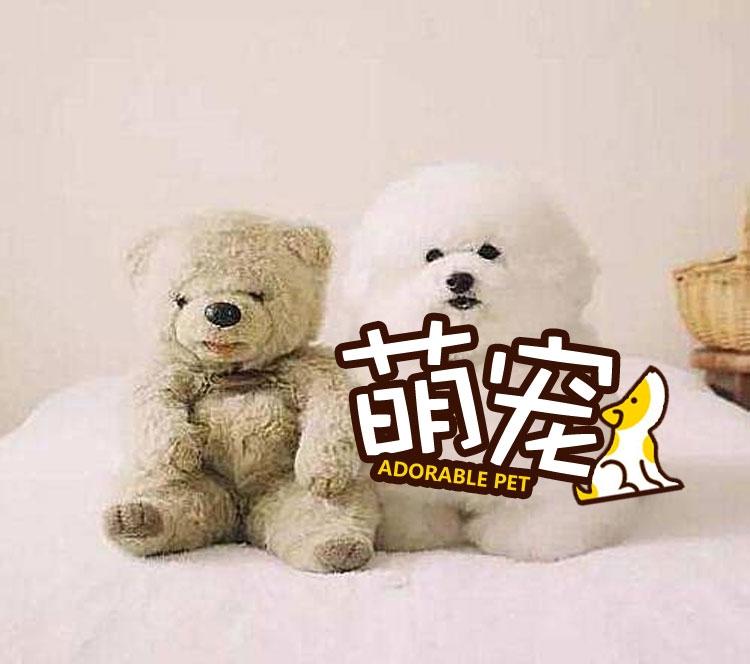 【萌宠】贵宾汪实力cos毛绒玩具,绝对以假乱真!