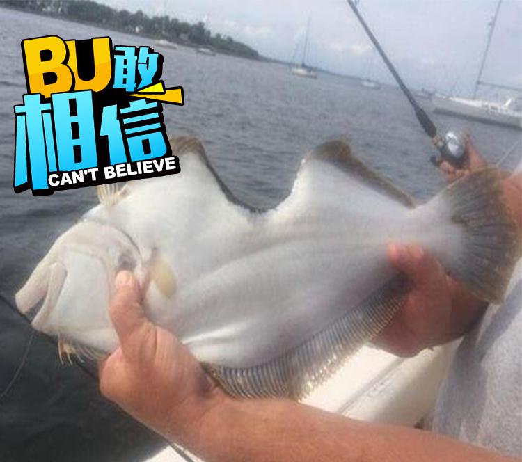 比目鱼被咬掉一块肉坚强存活 男子钓起后决定放生