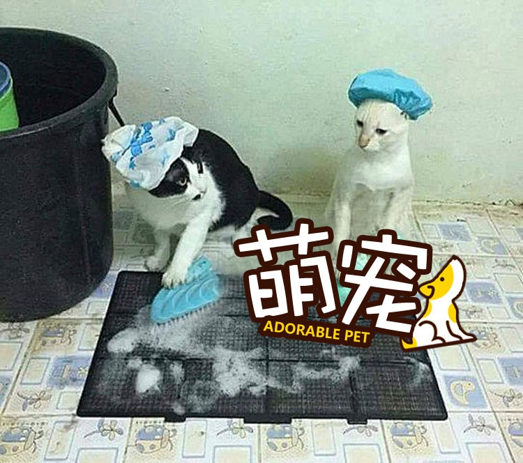 【萌宠】家里养了只会洗衣做饭喵星人是怎样一种体验