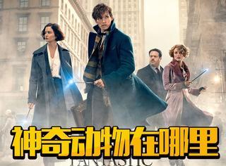 神奇生物失控,巫师麻鸡大战,这部《哈利波特》衍生电影燃炸!