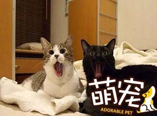 【萌宠】鬼畜般同步的喵星人们, 已被萌翻!