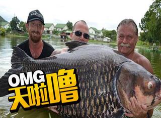 男子在泰国捕获201斤大鲤鱼 破世界纪录