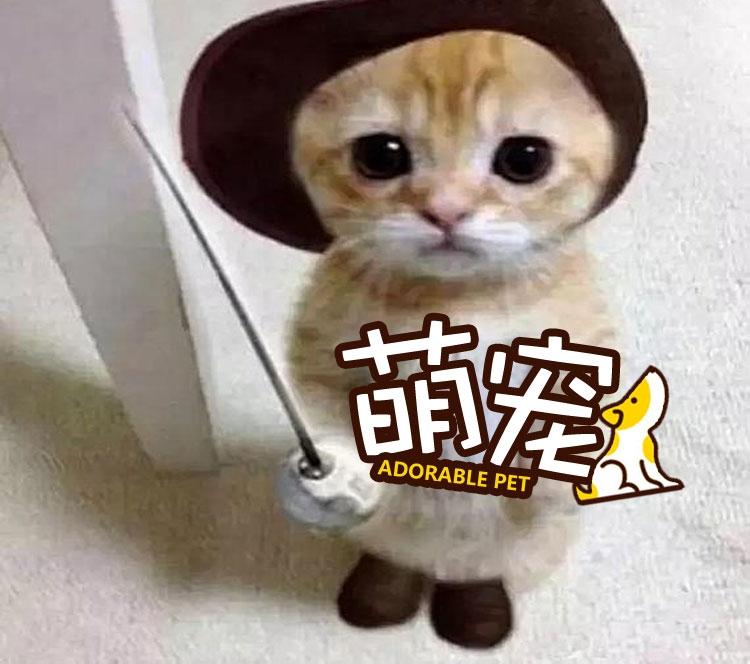 【萌宠】当喵星人穿上鞋子,画风有点辣眼睛!