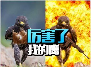 厉害了,一只秃鹰引发的战争!