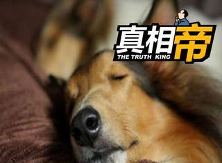 【真相帝】为什么有些人睡觉会认床呢?