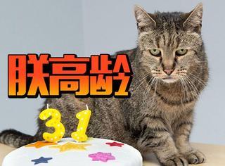 世界上最老的猫庆祝了它31岁生日,恭祝陛下万寿无疆