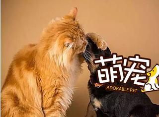 【萌宠】当喵星人和汪星人变成情侣!太有爱!