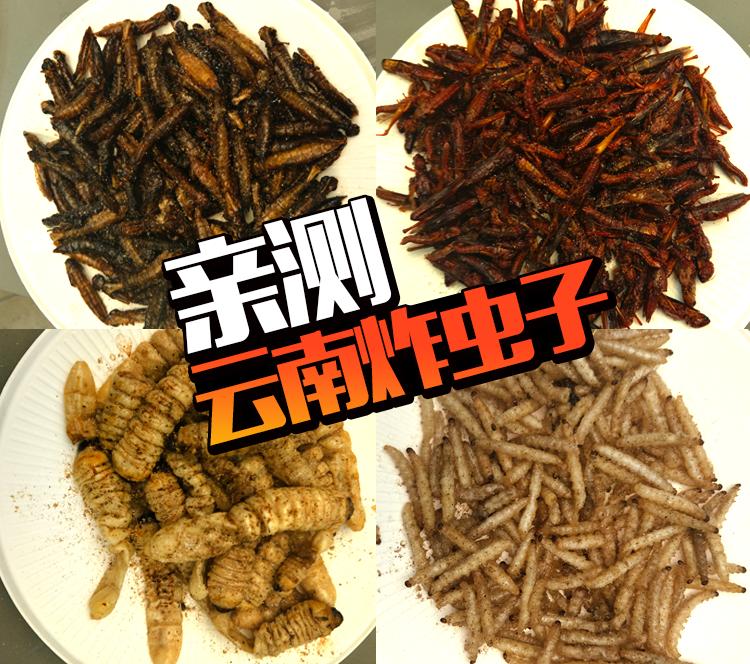 云南的虫子到底怎样才好吃?